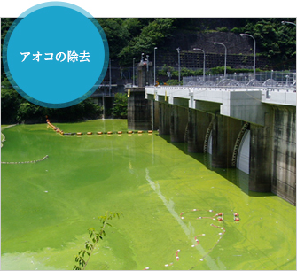 アオコが繁殖したダムの状態